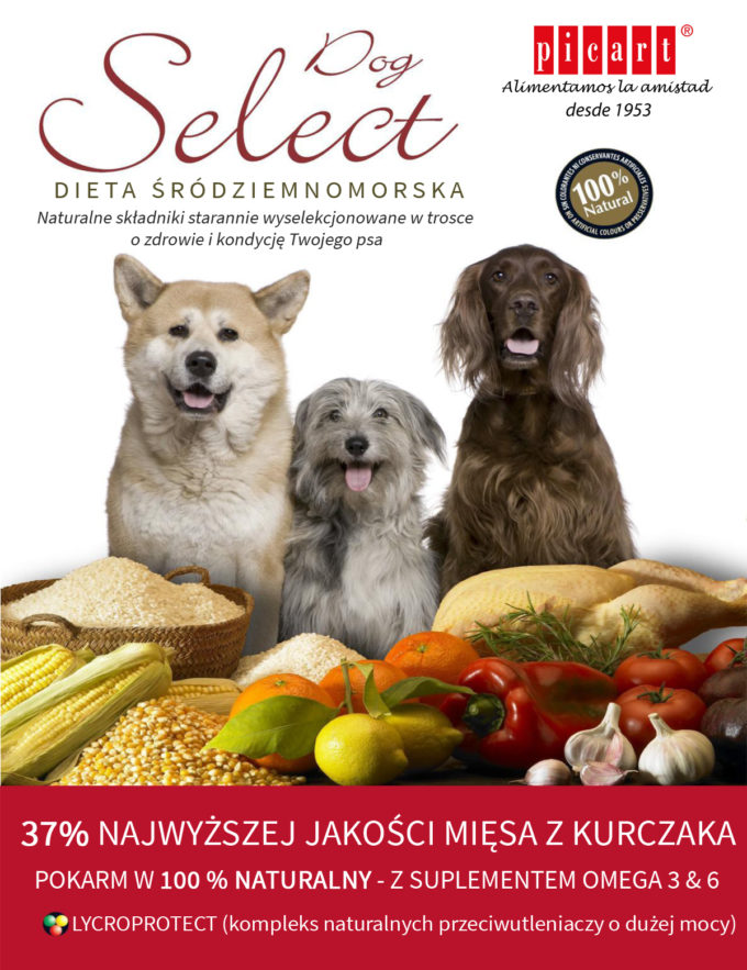 plakat_select_dog